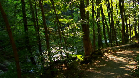 A New York hiking path on the Pocono Mountains at day Stock Video Footage