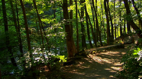 A New York hiking path on the Pocono Mountains at day Footage