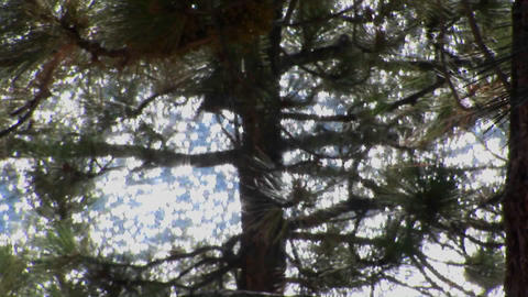 Water in Lake Tahoe shines through the branches of a tree... Stock Video Footage