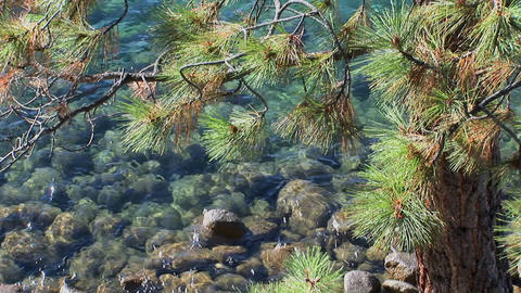 Water in Lake Tahoe undulates over rocks near the branches of a tree in the Sierra Nevada mountains Footage