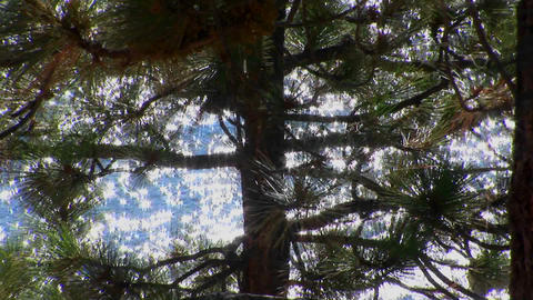 Sunlight sparkles on water in Lake Tahoe behind a tall... Stock Video Footage