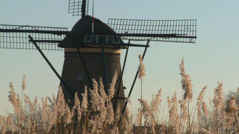 A windmill rises above tall grass in Holland Footage