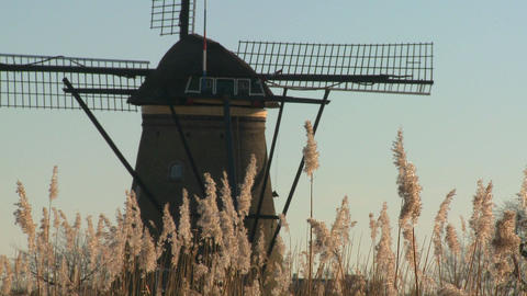 A windmill rises above tall grass in Holland Stock Video Footage