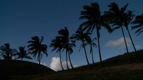 Palm trees blow in the wind on a remote tropical beach Stock Video Footage