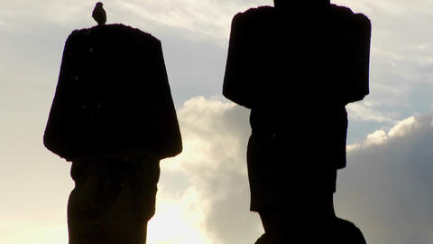 A tilt up reveals birds nesting on the topknots of Easter Island statues Footage