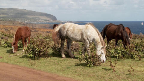 Horses graze on Easter Island with the town of Hanga Roa in the background Footage