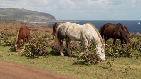 Horses graze on Easter Island with the town of Hanga Roa... Stock Video Footage