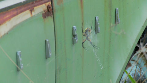 A spider has taken up residence with an old Ford Edsel in a field Footage