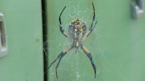 A spider has taken up residence with an old Ford Edsel in... Stock Video Footage