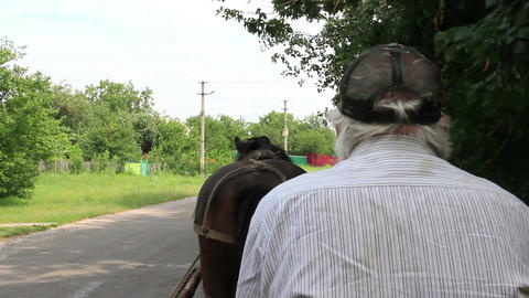 Horse cart driver riding countryside, harness animal, man in cap Footage