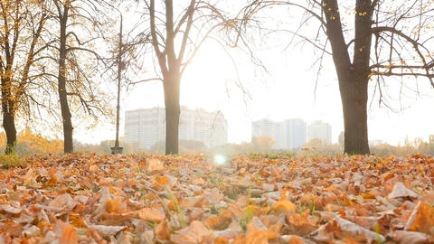 Beautiful landscape in the autumn park. Bright sun rays. Yellow leaves 10.15 Live Action