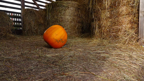 Large pumpkin slowly roll at hayloft, turn and stop in middle, slow motion Footage