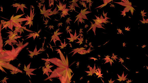 Momiji_ autumn Animation