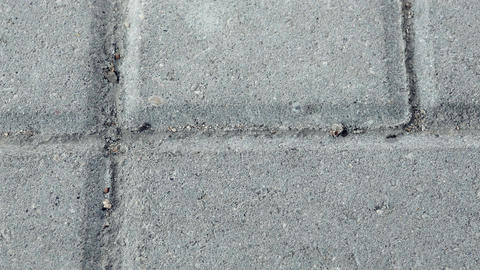 4K Black Ants Crawling on Ant Trail Between Concrete Urban Paving Slabs In Footage