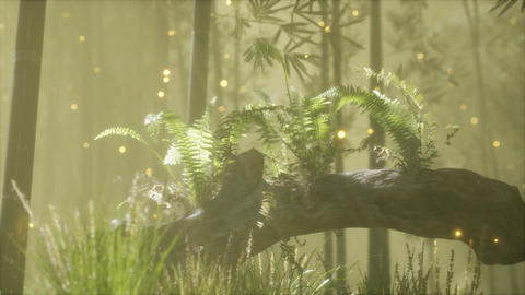 horizontally bending tree trunk with ferns growing, and sunlight shining Live Action