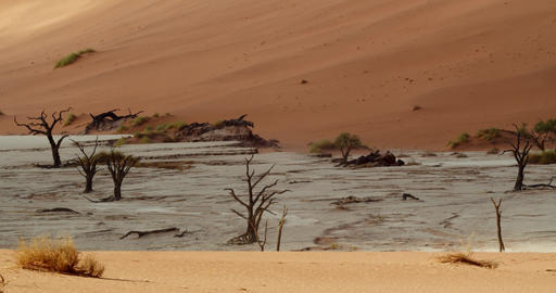Panoramic view on the beautiful white sand part of Namib desert, tourism, 4k Live Action
