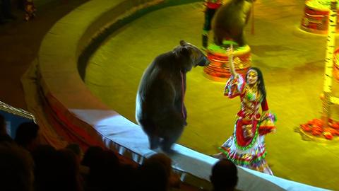 Circus bears Live Action