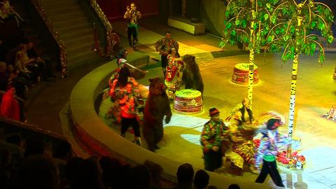Circus bears Footage