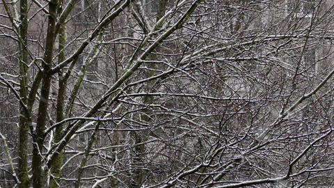1080p Snowfall in City Footage