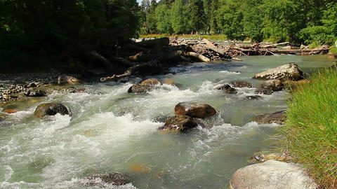 Rapids & large woody debris in mountain stream, turbulent water Footage