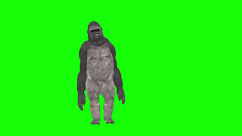 574 4k 3d animated avatar monkey walking blowing kiss greeting and dancing Animation