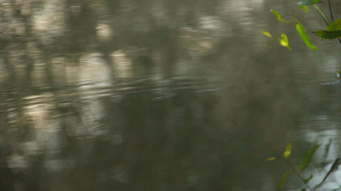 Droplets bouncing on water, tree reflections. Forest river Footage