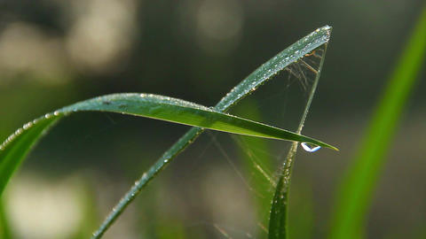 Water droplets on green grass, morning freshness, nature... Stock Video Footage