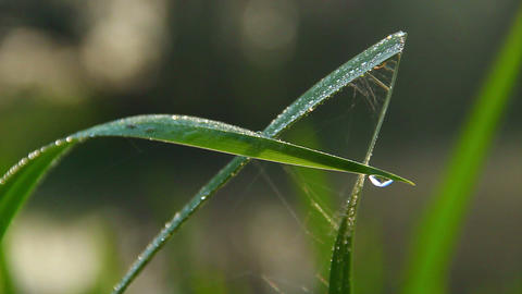 Water droplets on green grass, morning freshness, nature closeup Footage