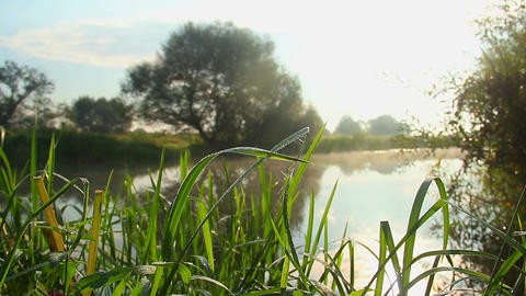 Countryside beautiful landscape, grass, river, morning sunshine Footage