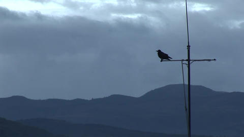 two crows on tv antenna Footage