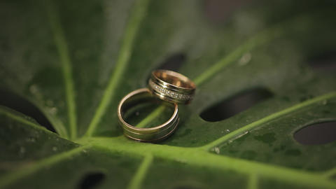 Wedding rings on a green wet leaf after rain. Wedding details and accessories Live Action