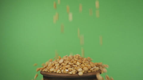Peas grains fall into a crowded clay bowl and fall out of it. Isolated on a Live Action