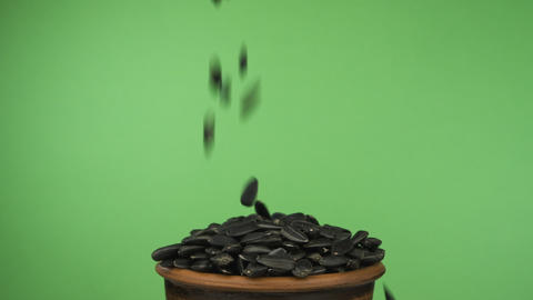 Sunflower seeds fall into a crowded clay bowl and fall out of it. Isolated on a Live Action
