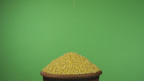 Millet grains fall into a crowded clay bowl and fall out of it. Isolated on a Live Action