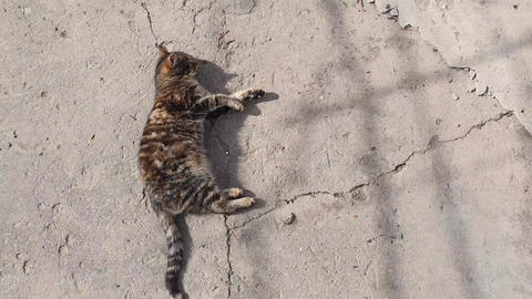 Cute country kitten laying down, outdoors on a concrete structure, heating on the warm spring sun. Live Action