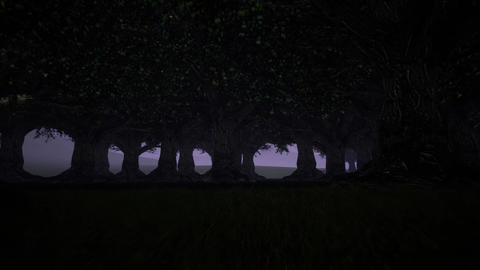 Spooky forest on dark background. Park outdoor. Foggy trees. Magic forest Live Action