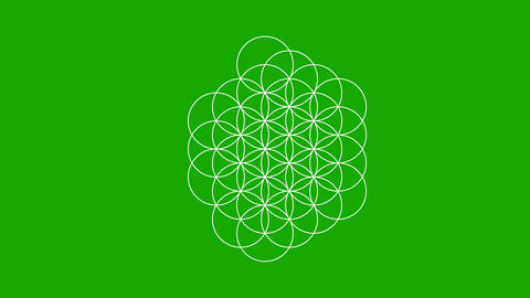 The Flower of Life Forming on a Green Screen Live-Action