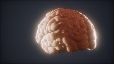 Loop Rotating Human Brain Animation Live Action
