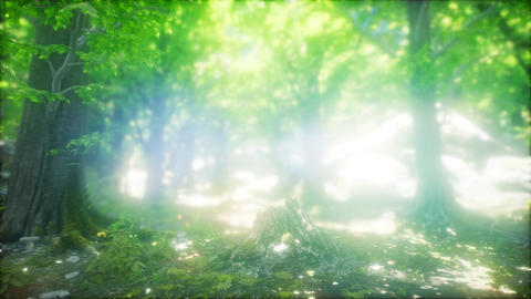 Morning in the Misty Spring Forest with Sun Rays Live Action
