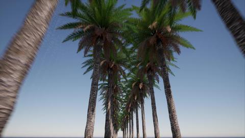 Beautiful avenue of palms. Miami beach. Outdoor tourism landscape. Urban Live Action