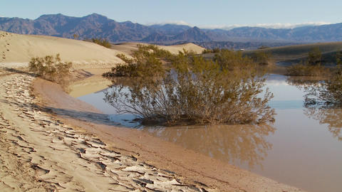 An oasis in Death Valley National Park offers a refuge... Stock Video Footage