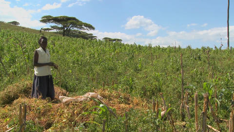 A woman works on a farm in Africa Stock Video Footage