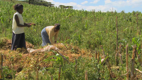Two women work in the fields on a farm in Africa Stock Video Footage