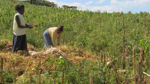 Two women work in the fields on a farm in Africa Stock Video Footage