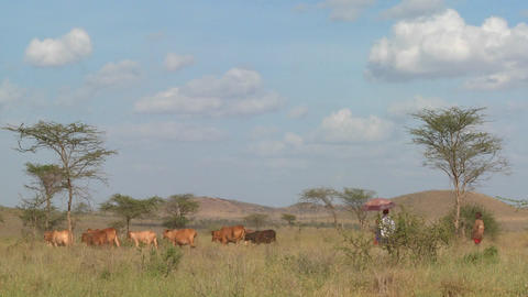 A Masai woman with a parasol walks under the hot African... Stock Video Footage