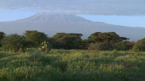 A beautiful morning shot of Mt. Kilimanjaro in Tanzania,... Stock Video Footage