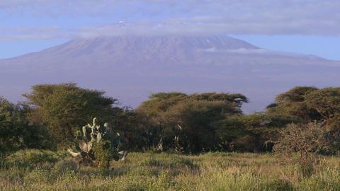 Beautiful time lapse shot of Mt. Kilimanjaro in Tanzania,... Stock Video Footage
