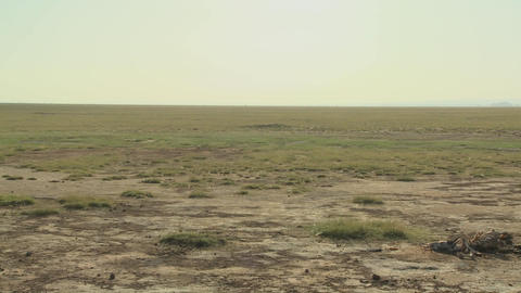Pan Across Parched Desert To The Skeleton Of A Dead Animal Lies In The Desert As An Example Of Life stock footage