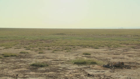 Pan across parched desert to the skeleton of a dead... Stock Video Footage