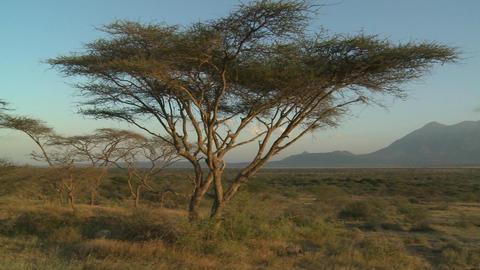 Mt. Meru in the distance, across the Tanzania savannah Stock Video Footage